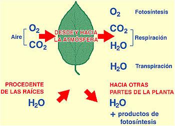 fotosintesis1.jpg